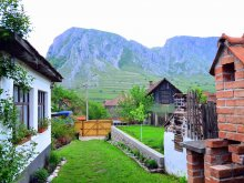 Accommodation Valea Barnii, Nosztalgia Guesthouses