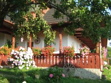 Accommodation Dimitrie Cantemir, Ana Maria Guesthouse