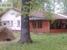 Accommodation Alexandru I. Cuza, Forest Mirage Guesthouse