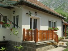 Accommodation Valea Uzei, Anci Guesthouse
