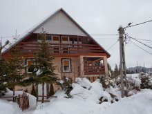 Accommodation Băile Selters, Pingvin Guesthouse