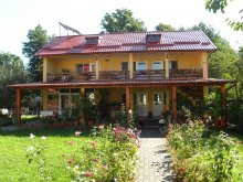 Accommodation Valea Cucii, Criveanu Guesthouse